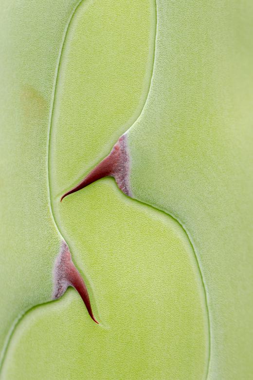 Agave - Moeder natuur in de Hortus