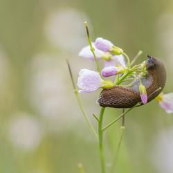 Lekker bloemetje