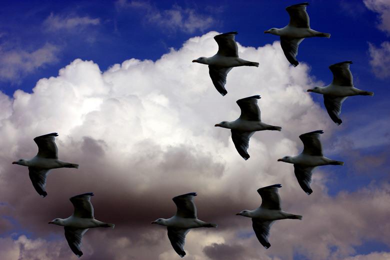 9 meeuwen in vogelvlucht - 9 meeuwen in vogelvlucht