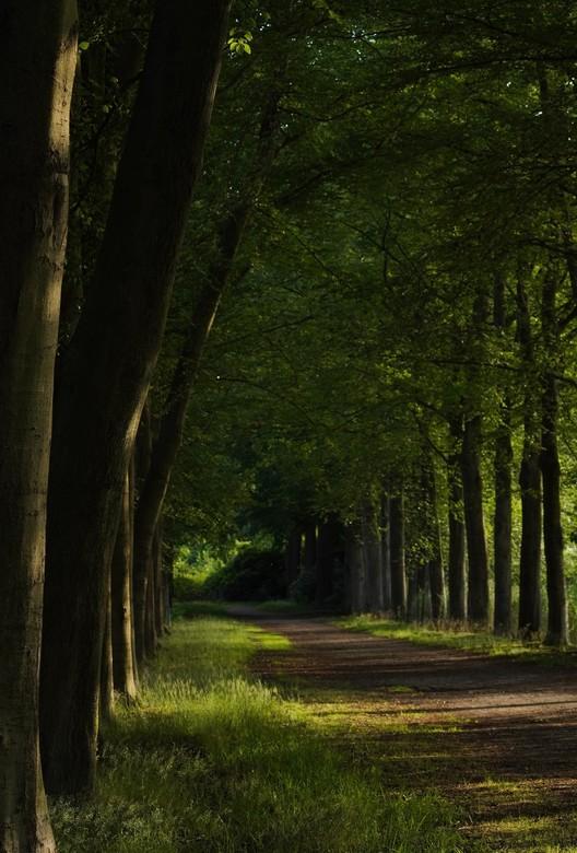 Ondergaande zon - Prachtig bospad met ondergaande zon