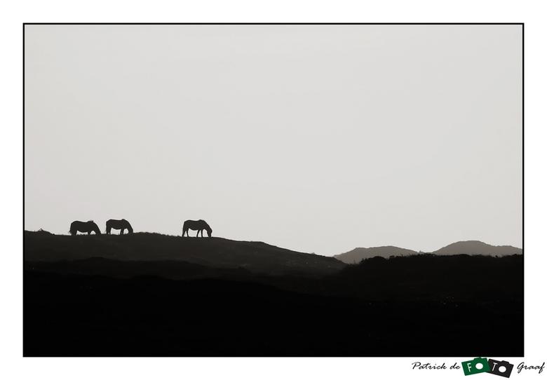 Wild Horses on Texel -