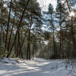 Winter wonderland in de Brunssummerheide