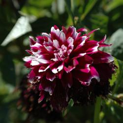 Lensbaby-Flower