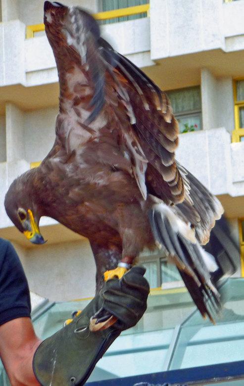 Roofvogel - Deze foto heb ik genomen in tenerife