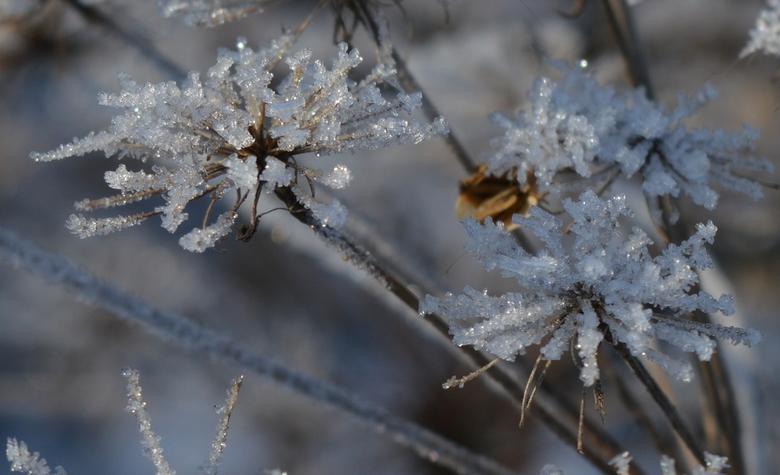 DSC_7225 crop - ijskristallen