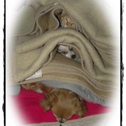 Dierenflat: Katertje Bram en mijn Chihuahua's Lisa & Vicky.