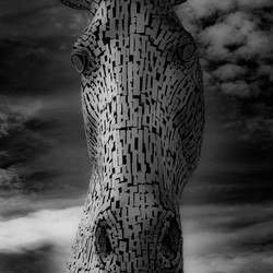 Kelpies zwart/wit