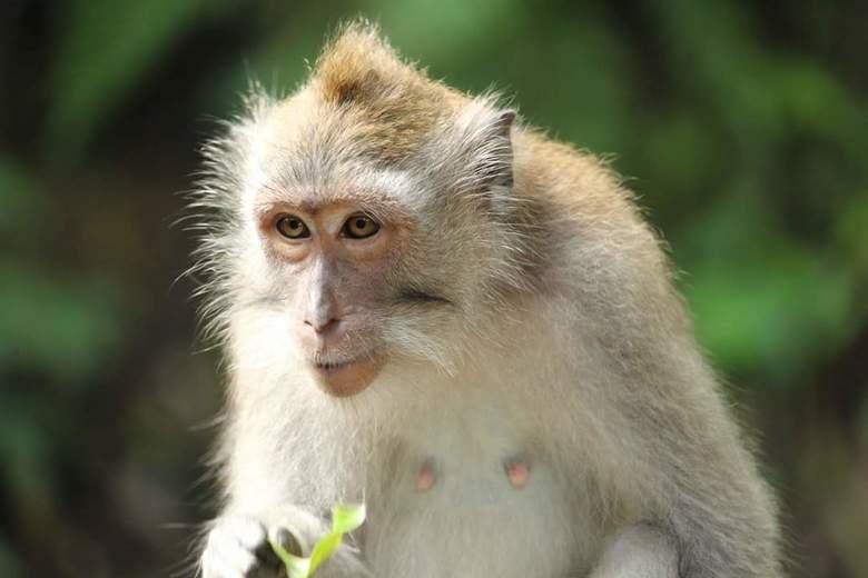 Monkey forest  -