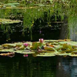 schoonheid op het water
