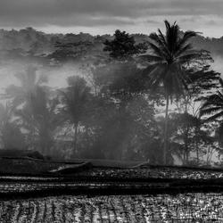 Bali sunrise @ rice fields