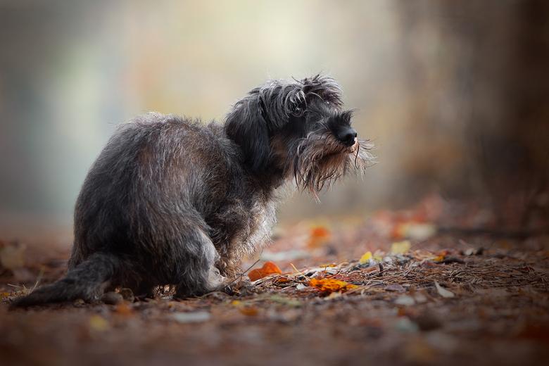 """Als je moet, dan moet je..... - Ik deed een fotoshoot van de hond van mijn ouders, maar hij moest eerst even iets voor zichzelf doen <img  src=""""/image"""