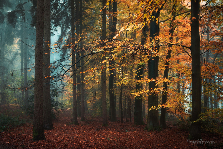 Forest Whispers. -