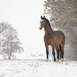 Winter wonderland horse