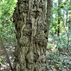 De natuur als houtsnijbewerker
