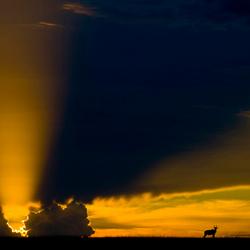 Zonsondergang Masai Mara ( Kenia )