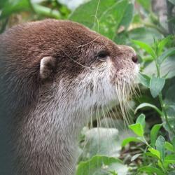 Otter die nadenkt?