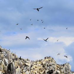 Flying Above rocky ground