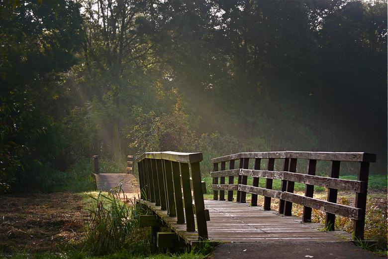 Brug in de zon - bruggetjes in het bos waar de zon door de bomen valt.<br /> groeten, bert