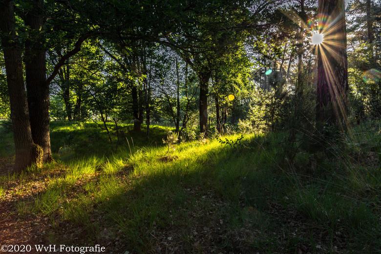 Zonsopkomst de Kampina Boxtel - Zonsopkomst in de Kampina bij Boxtel.<br /> Fraai licht zoekt zich een weg door de bomen.