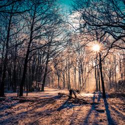 Magisch winterbos
