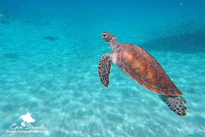 zee schilpad - Snorkelen in curacao, voor de eerste keer .<br /> En dan deze zee schilpad treffen, wat er dan door je heen gaat, wauw