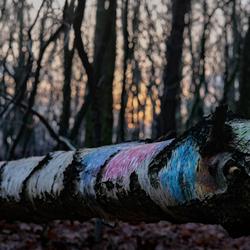 Kleurenspel in het bos