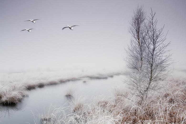 Winterwonderland - Vorige week zaterdag was het mistig en het had een klein beetje gevroren, dat betekend vaak rijp. De Engbertsdijksvenen zagen er ge
