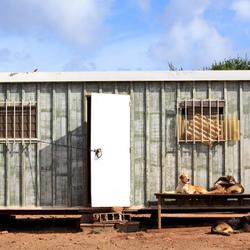 Bamboo Animal Shelter Algarve