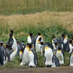 Patagonia Vuurland