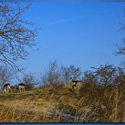 Herten AWD