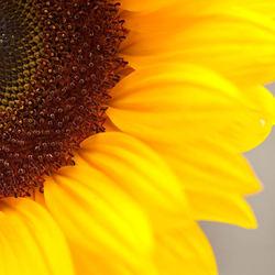 Zonne (tjes) bloem I
