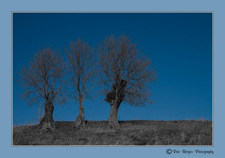 Met z'n Drieën - Deze drie jongens stonden daar zo mooi op de heuvel  erom te vragen om gefotografeerd te worden.<br /> Deze bomen geven mij het gevo