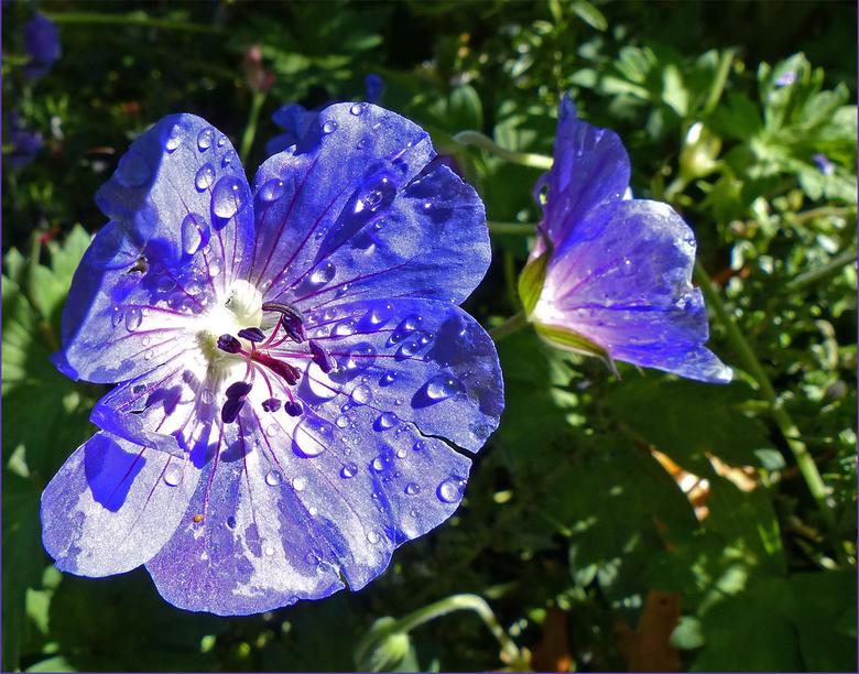 """Bloem - Er zijn nog bloemen over in Artis<img  src=""""/images/smileys/smile.png""""/>"""