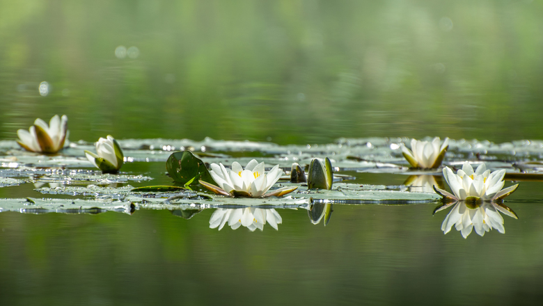 Daarbij de waterkant - De slootjes en grachtjes zijn weer prachtig met de mooie waterlelies...<br /> <br /> Bedankt voor jullie mooie reacties op mi