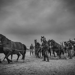 Reddingswerken met paarden...