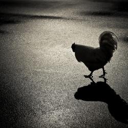 FeatheredShadow