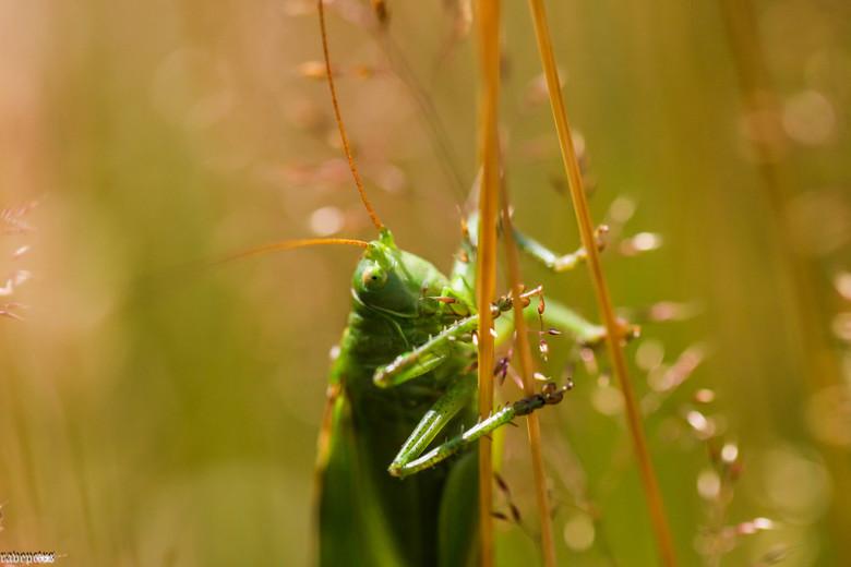 hangend in het gras