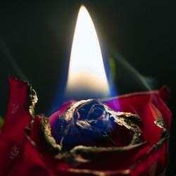 Brandende roos 2