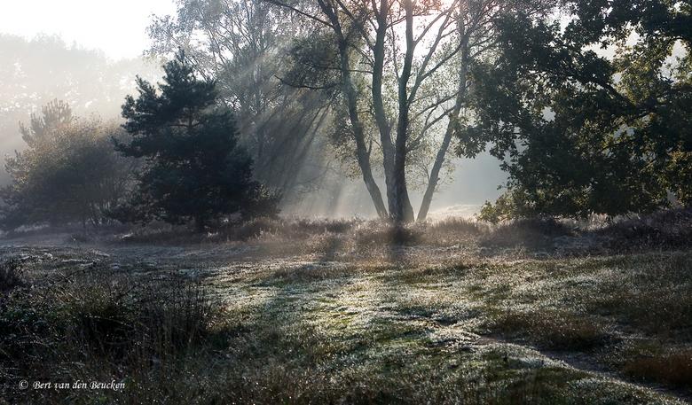Eerste zonnestralen  - Zondagmorgen 12 oktober vroeg op. De zonnestralen zoeken hun weg tussen de bomen. <br /> Locatie: Beegderheide