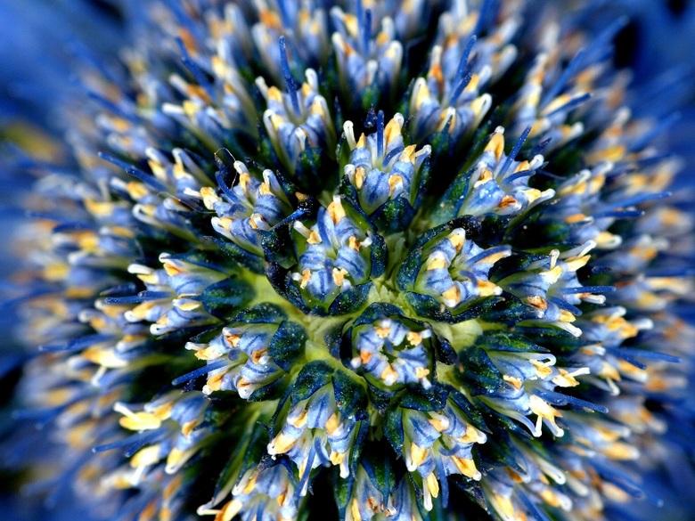 B kl.jpg - Soms is het hart van een bloem een boeket op zich....