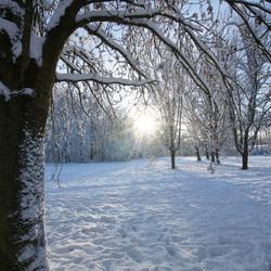 I love Snow 1
