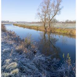 Winter Linge