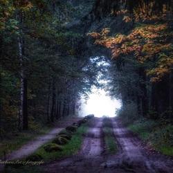 Volop herfst in het bos