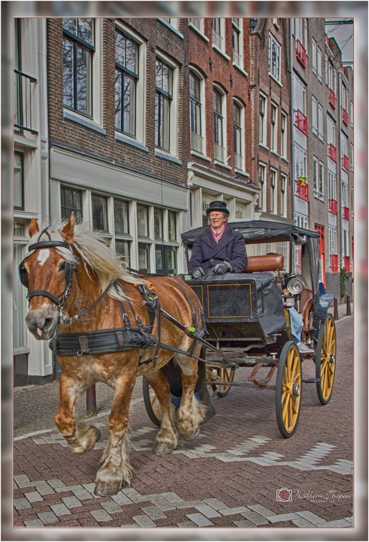 Paarden Taxi Amsterdam -