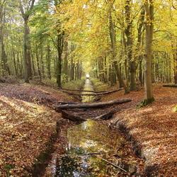 Herfst in het Dijkgatbos