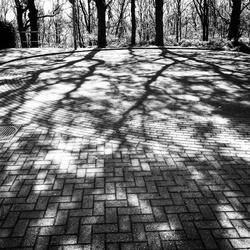 Spooky shadow 06