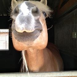Jive, funny face!