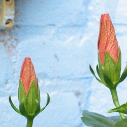 Balkon bloemetje