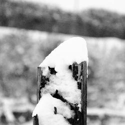Winter 2010 (1)