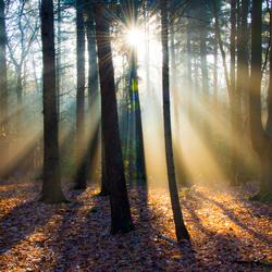 Zon, mist, licht
